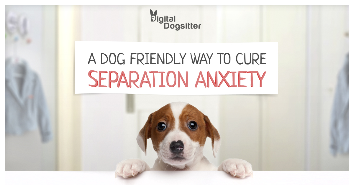 Digital Dogsitter - dog friendly way to cure separation anxiety